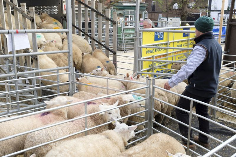 Newark and Sherwood District Council said it is terminating its lease with Newark Livestock Market (Stock photo)