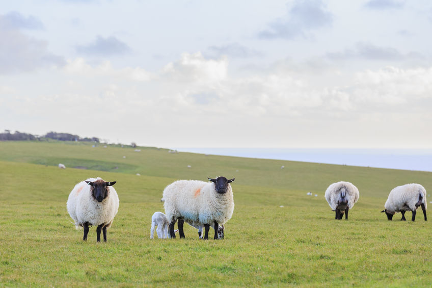 Around 70% of the UK agricultural land area is classified as grassland