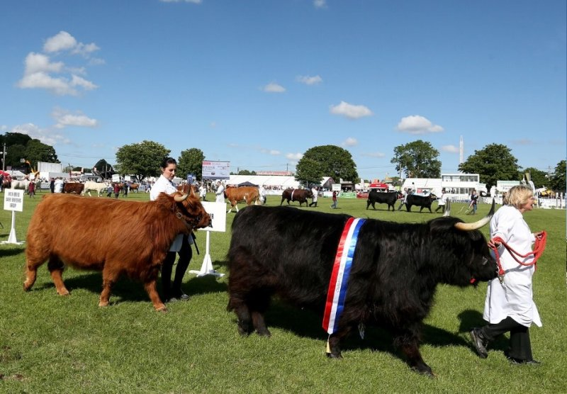 The South of England Show, which attracts more than 65,000 visitors, has been cancelled (Photo: South of England Show)