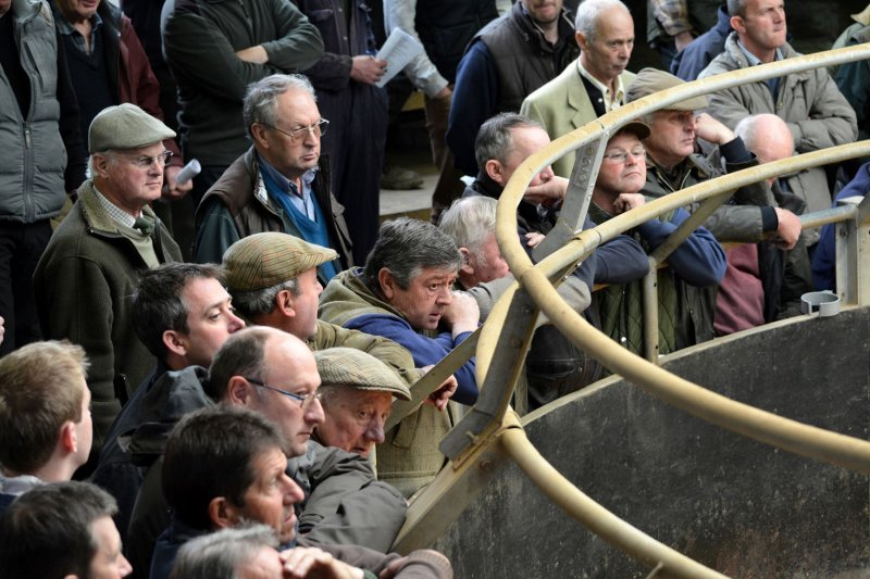Auctioneers across the UK say livestock markets hold the key to maximising returns for farmers