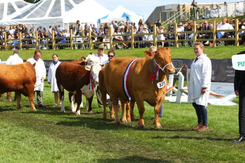 Numerous high profile agricultural shows and events have been called off due to the coronavirus situation
