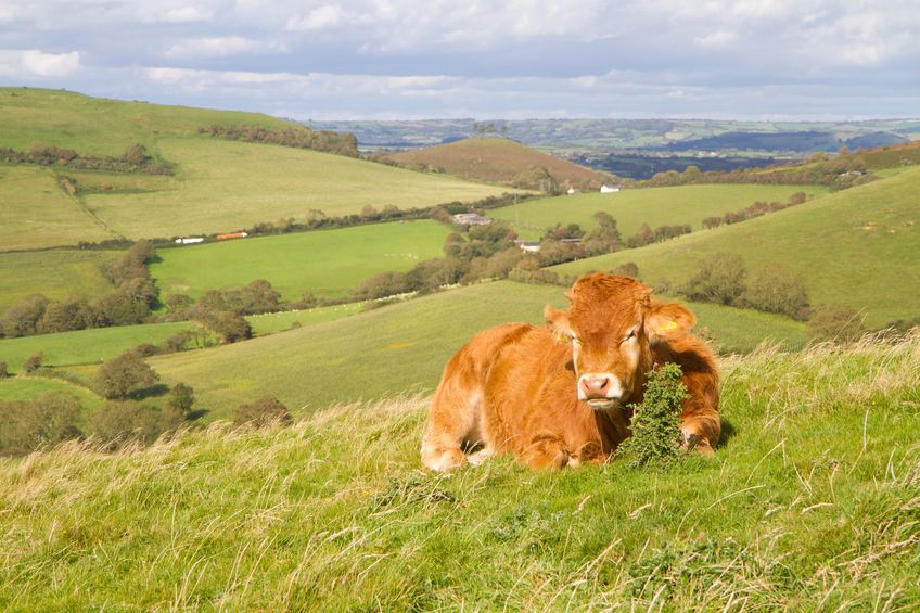 British beef producers have told the government to prioritise agriculture and food production amid the coronavirus pandemic