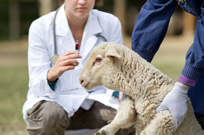 Veterinary services will be available only for emergency care and to maintain food supply chain