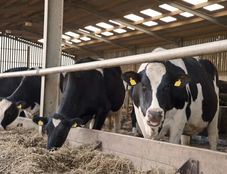 It is thought about 300 dairy farmers will be eligible for reimbursement if the scheme is approved