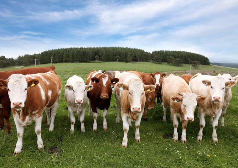 Government action is needed to tackle the fall in beef and lamb prices, NI producers have said