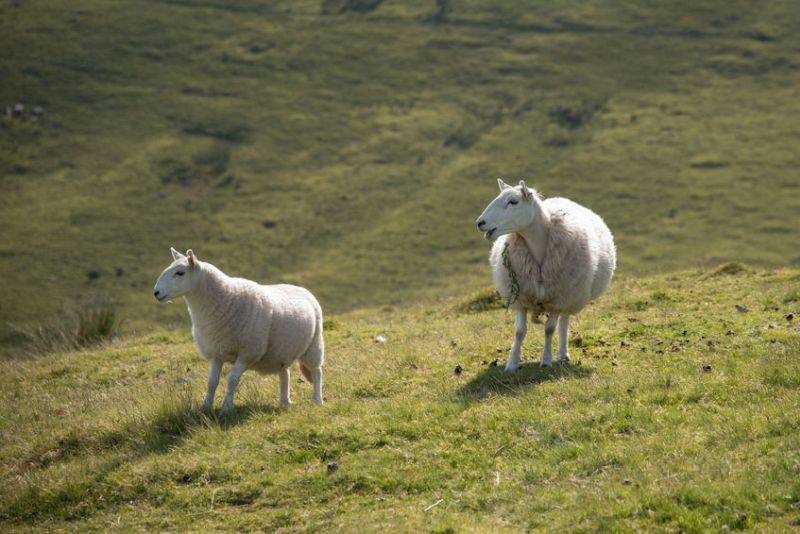Welsh farm businesses continue to be affected by unprecedented levels of supply chain disruption
