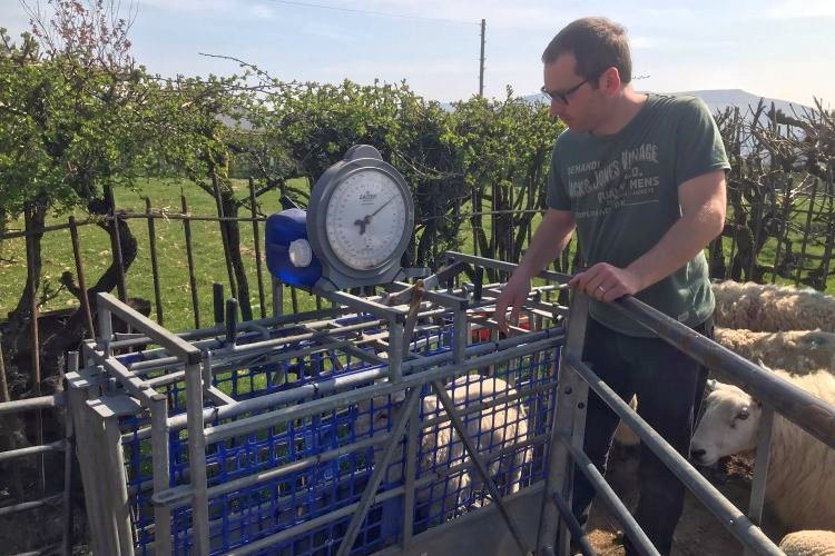 Gwyn Johnson from Pontypridd, south Wales, has seen the benefits of monitoring lamb performance