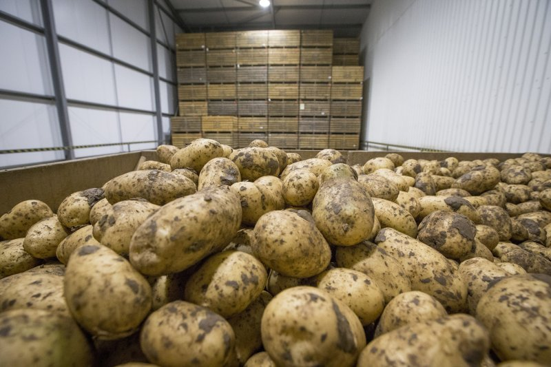 1.19 million tonnes of potatoes were in growers' stores at the end of March