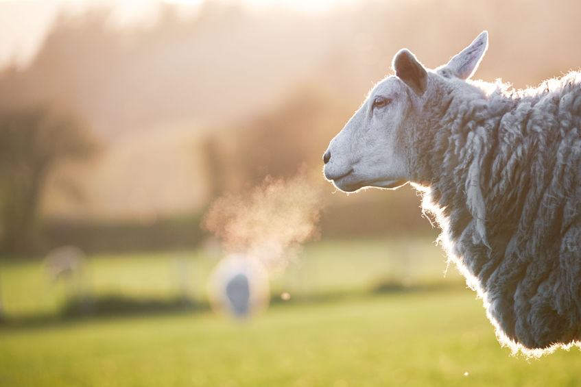 120 Welsh ewes and lambs were recently stolen from a North Wales farm
