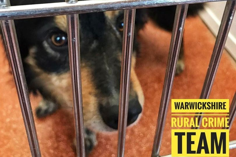 The seizure of the dogs comes as part of an investigation into livestock worrying in North Warwickshire
