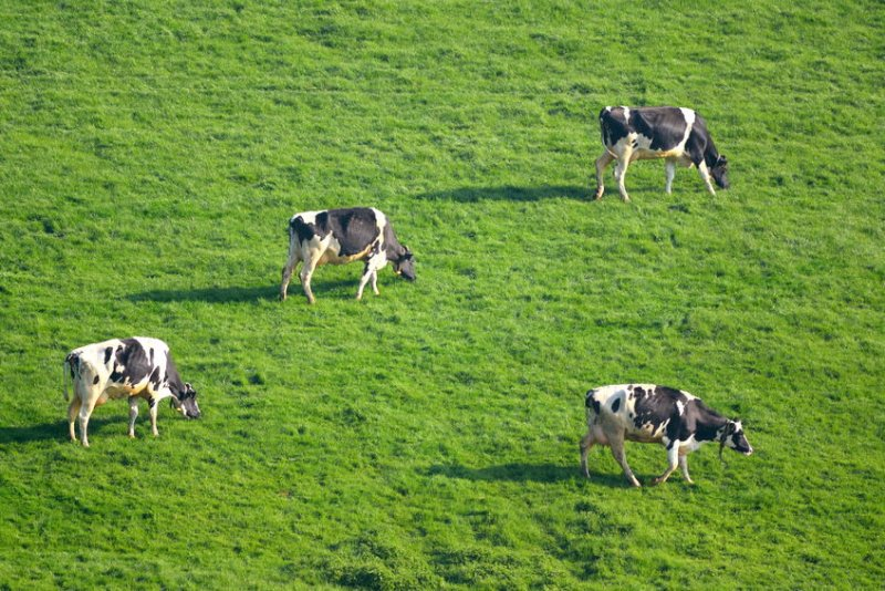 The package of support will help address some of the most immediate cash flow problems faced by dairy farmers