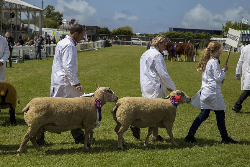 Royal Cornwall Show has become the latest farming event in the UK to be cancelled