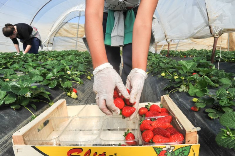 The new advertising campaign aims to recruit part of the 70,000 pickers the UK requires each year
