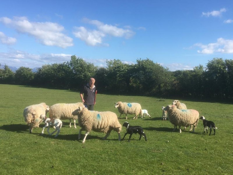 Peter Williams at his Anglesey farm, with some of the first fat-tailed Damara lambs born in the UK