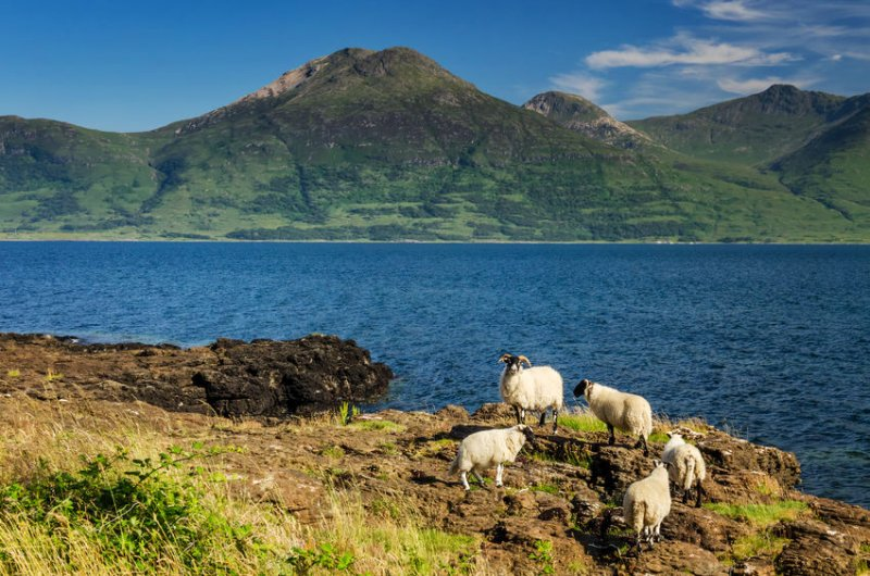 The vast majority of countryside firms in Scotland want to restart the local rural economy, according to a survey