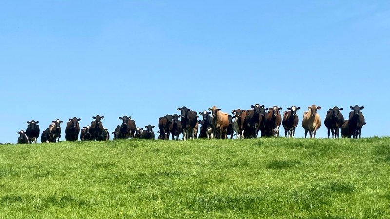 The initial test found approximately 10 percent of the farm's herd were positive for the disease