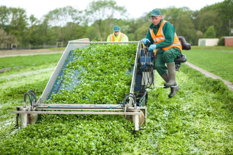The grower is anticipating 600 tonnes of the crop between now and late October