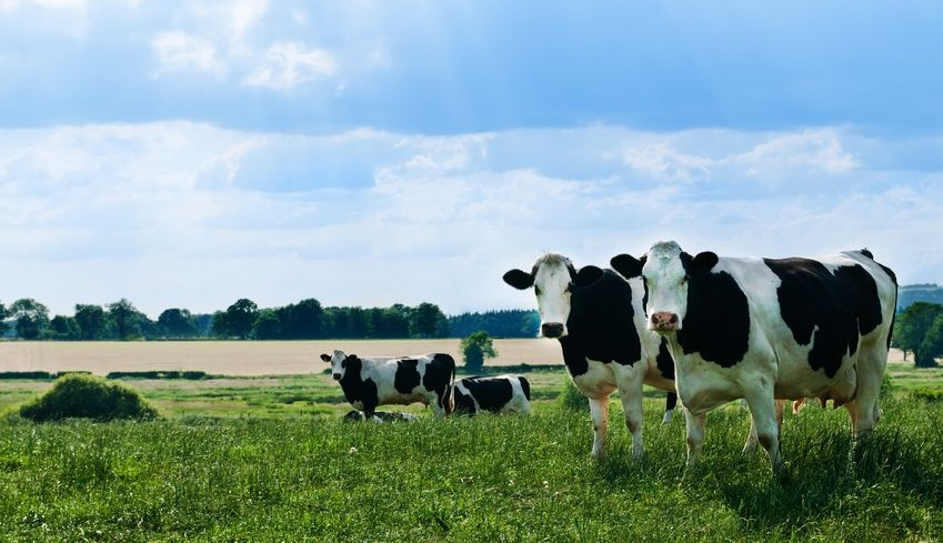 The training directory currently lists over 100 dairy-related courses across the UK