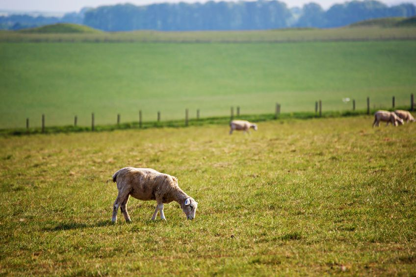 Farmers have stressed that if small abattoir numbers continue to fall, competition would be further eroded in the market