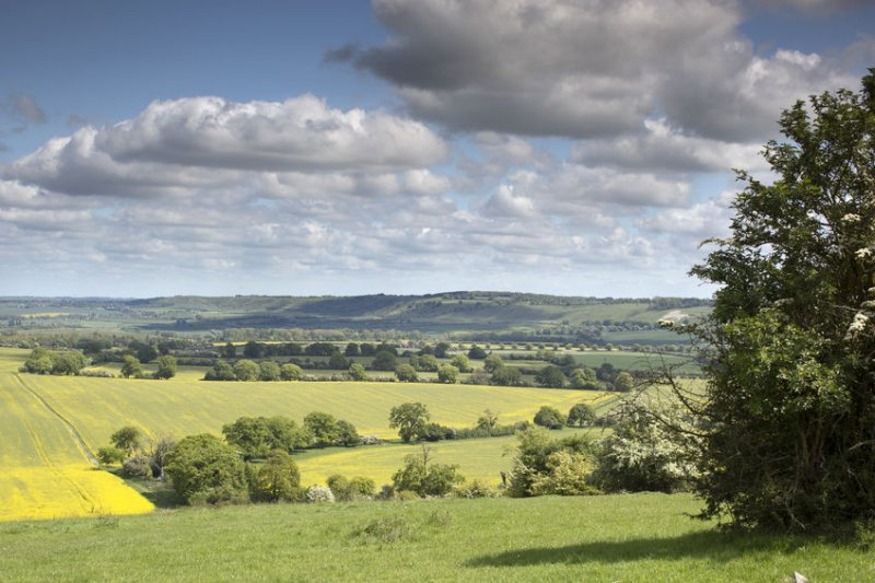 A new investment fund has been launched looking to buy UK farmland for tree planting
