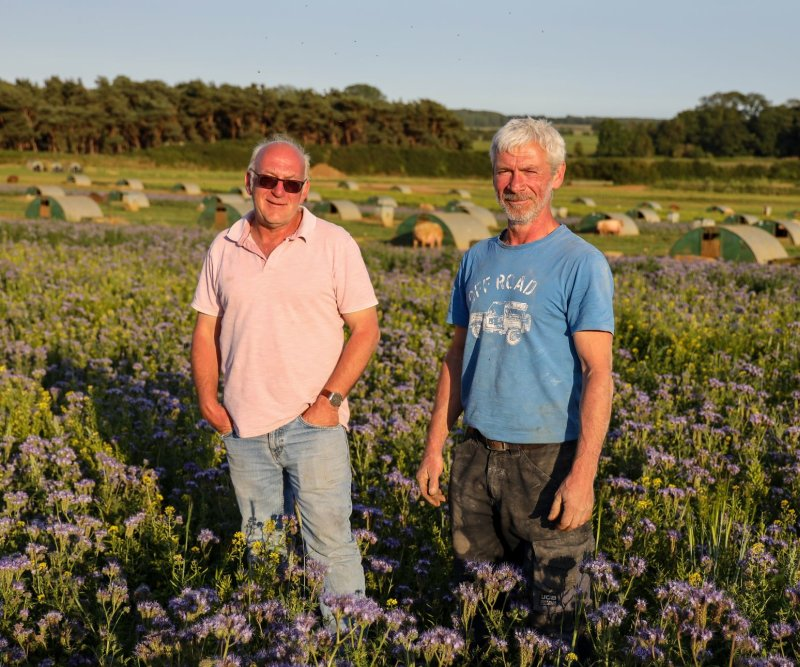 Brothers Mark and Paul Hayward have turned half their land to wildflowers