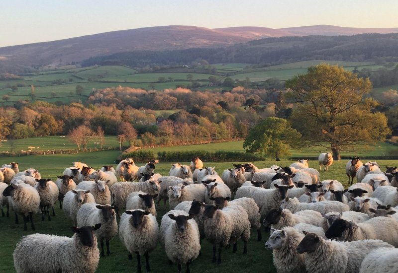 The public can now get a taste of Exmoor at home by buying grass-fed lamb direct from some of the area's farmers