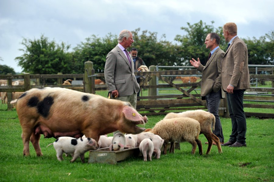The Prince of Wales visited Cotswold Farm Park ahead of the 4 July go-ahead for all farm attractions to open