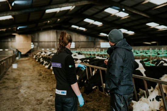 Since launching in 2017, the Gwaredu BVD has achieved successful results, with over 8,300 herds in Wales now part of the programme