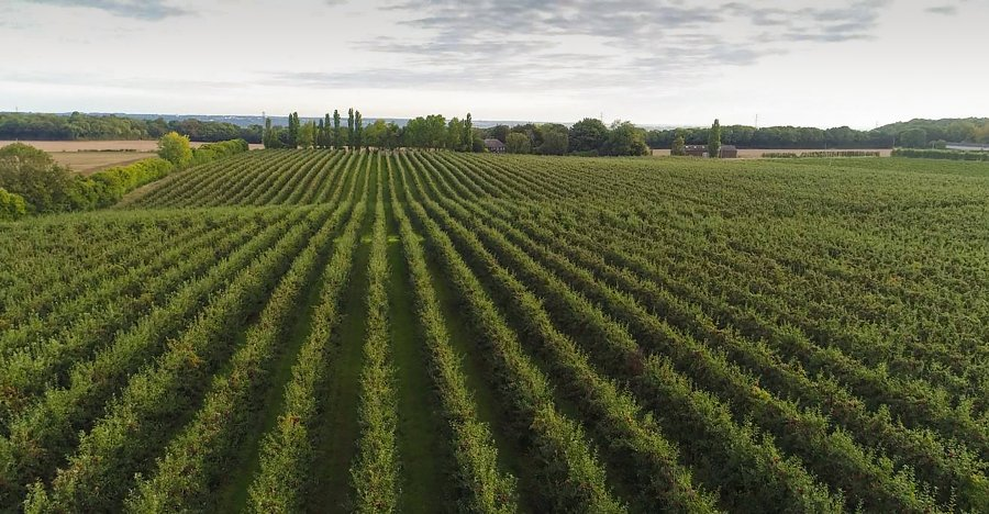 The Kent fruit producer will now operate across 820 hectares following the acquisition