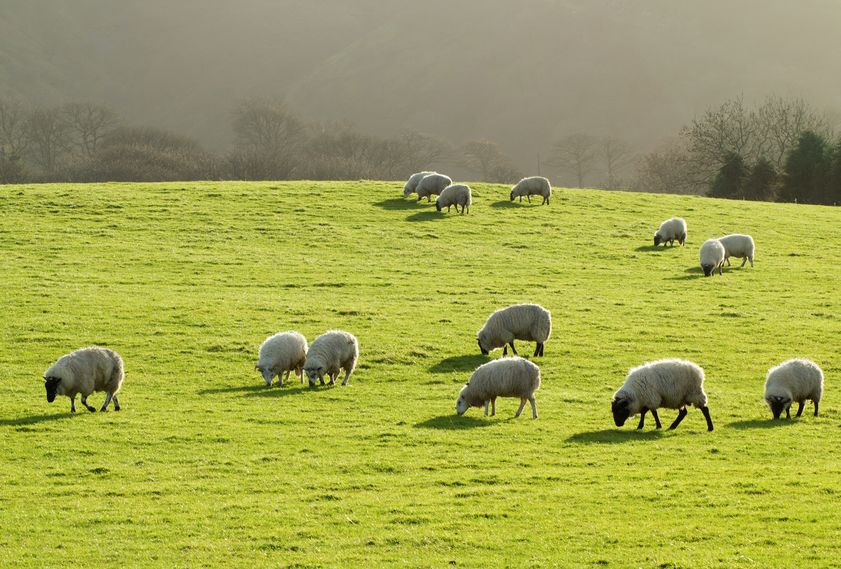 NFU Cymru says the Covid-19 crisis has shown the importance of Welsh food production