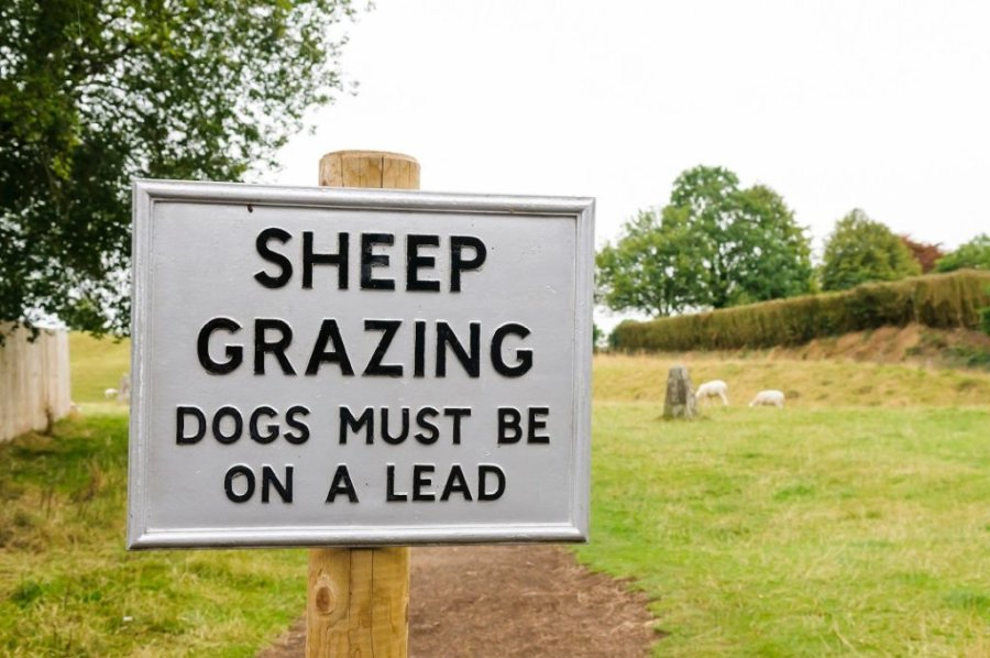 Police are concerned that as Covid restrictions are lifted, more people will travel to the countryside and walk their dogs around sheep without care