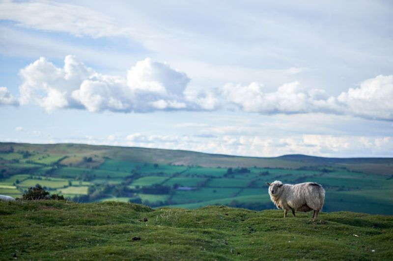 The Tenant Farmers Association says  the scheme should be 'outcome focused' which targets the farmed environment and sustainable food production