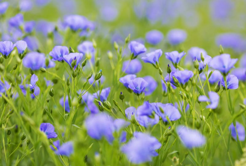 The industry will be able to protect the quality and yield of linseed crops this harvest