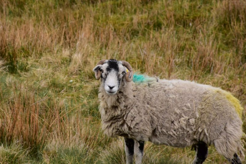The petition was launched after there were increasing reports that wool fleeces were being dumped into the manure heap rather than being sold to British Wool
