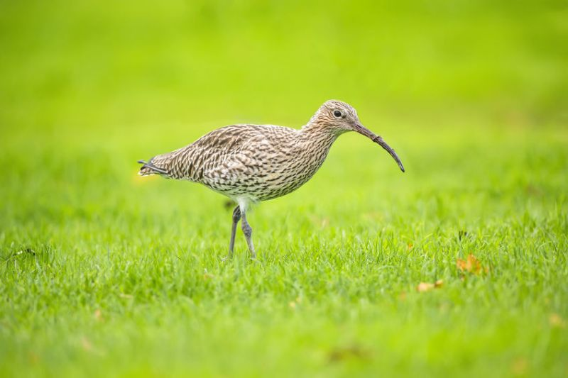 The Biodiversity Challenge Funding from Scottish Natural Heritage will be used to improve farmland habitats for waders