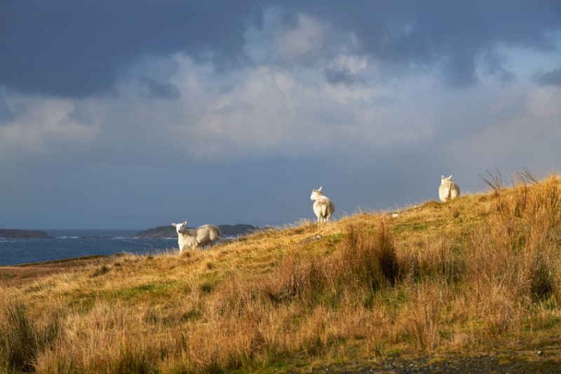 The content has been posted during this week's Love Lamb Week campaign which highlights the sustainable and nutritional qualities of British lamb