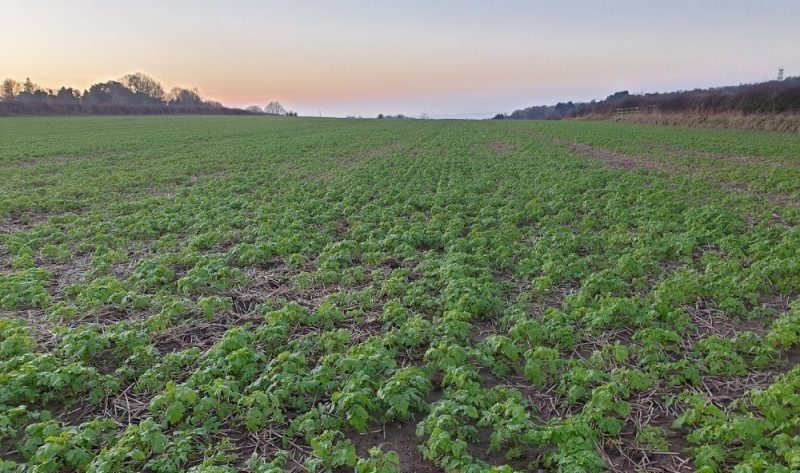 The aim is to help farmers plant winter crops to take up nitrates