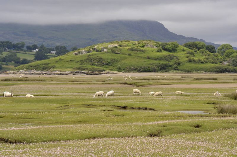 An upland farm in Gwynedd has embarked on trials in a bid to eliminate creep from lamb fattening