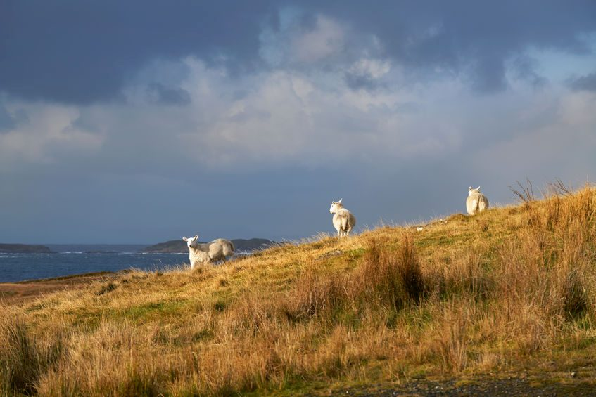 The reopening of the foodservice market following the lockdown has given a major boost to UK lamb exports