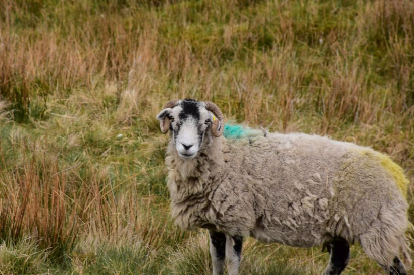 A pledge has been made to use Welsh wool in public buildings, but calls have been made for Welsh government to 'double down' on the commitment