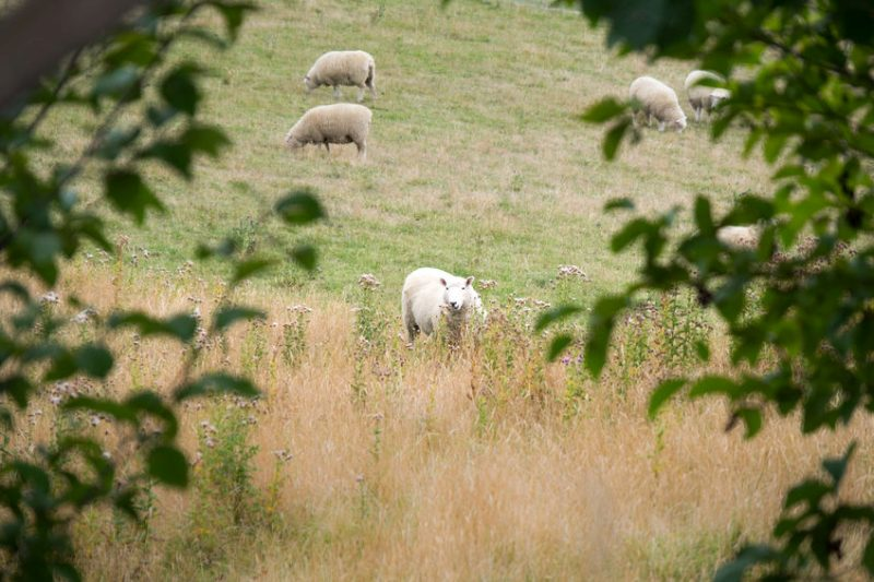 Police are appealing for witnesses following the suspected livestock worrying case