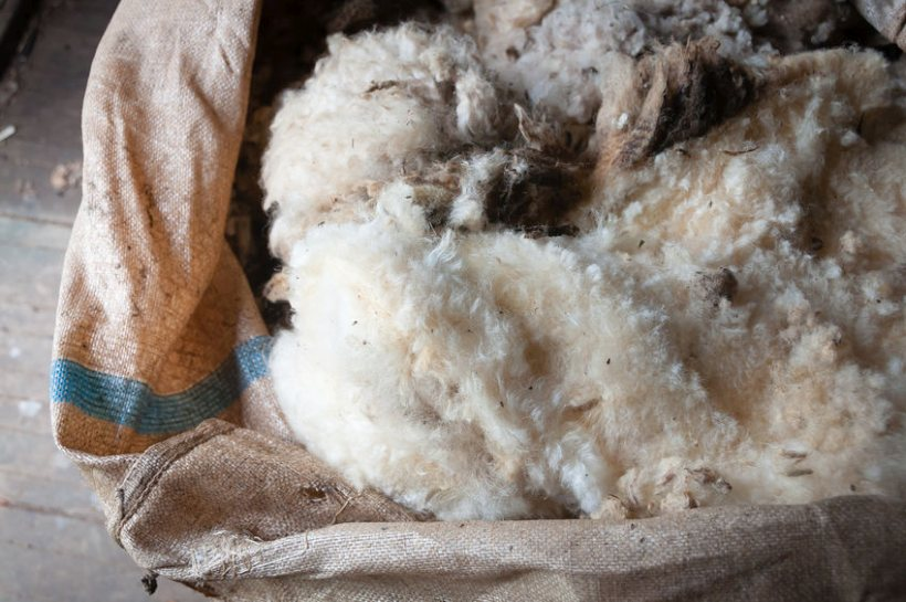 Campaigners are calling for British wool products to be mandatory for insulation and carpeting in any public financed building projects