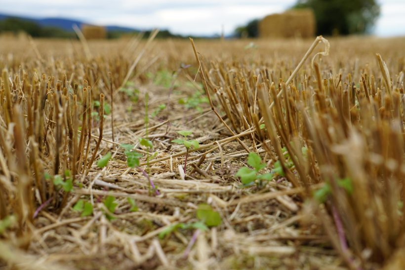Five farmers are trialling different seed mixes and establishment methods to keep costs low and returns high