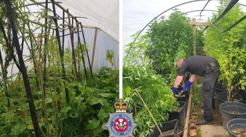 (Photo: Dyfed-Powys Police)