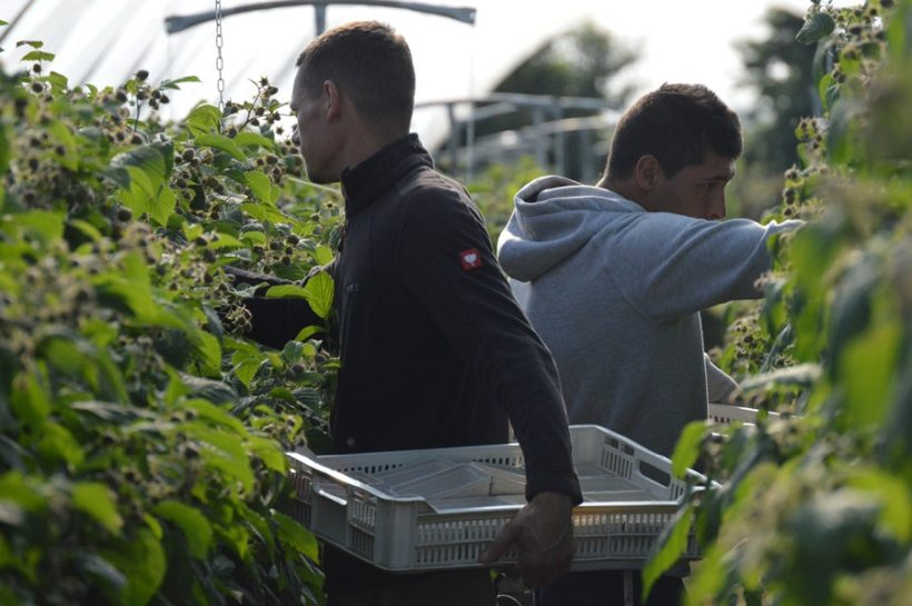 From NFU Scotland's surveying of its horticulture members, 100 percent indicated that their businesses depended on non-UK seasonal agricultural workers