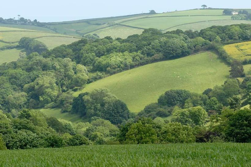 Natural England has pulled the plug on wood-pasture restoration in the uplands (WD5) within the Countryside Stewardship Scheme