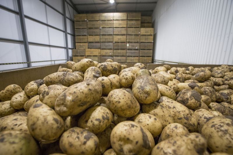 UK seed and fresh potatoes exported between July 2019 and June 2020 were worth £113m