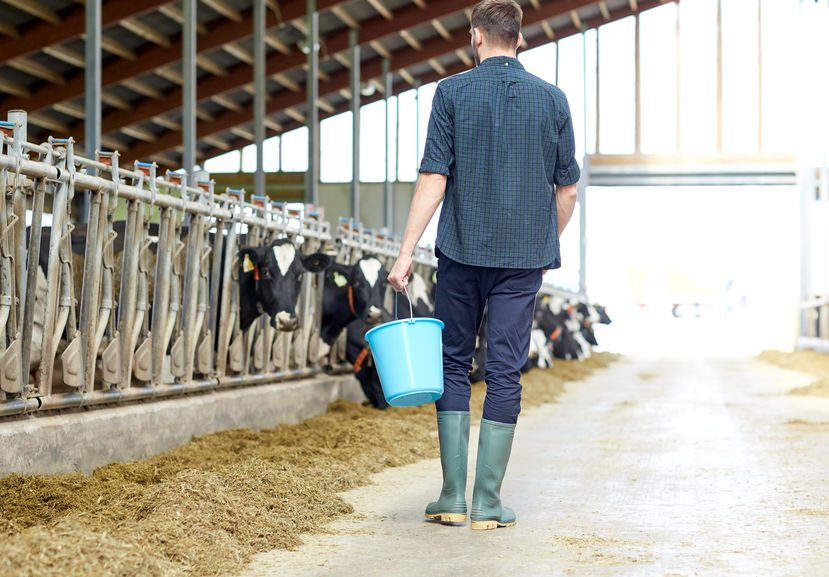 Concern is growing for those dairy farming businesses that rely on foreign workers
