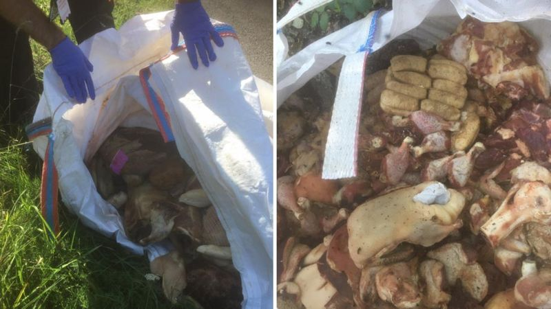 The meat had begun to rot and presented a serious health hazard (Photo: Dorset Council)