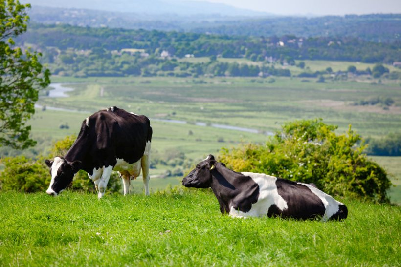 The report calls for 'new innovations' for the UK livestock sector to slash its emissions